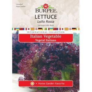 Italian Lettuce Lolla Rossa 69615