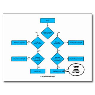 Heterotroph Flow Chart   You Are Here Post Card