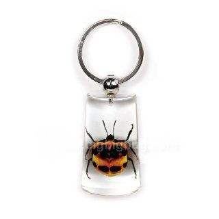Real Genuine Tea Seed Bug in Lucite Key Chain 2 Sided