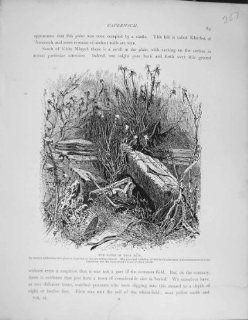 Palestine 1881 Ruins Tell Hum Capernaum Black Basalt   Prints