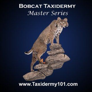 Lifesize Bobcat Taxidermy Training Video on DVD; Learn How To Do Bobcat Taxidermy: Master Taxidermist Bill Atkins: Movies & TV