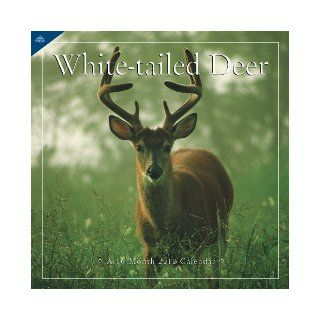 White Tail Deer 2010 Wall Calendar Inc.   Avalanche Lang Holdings 9781604349610 Books