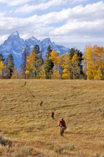 Mountain Biking Near Grand Teton National Park, WY Wall Mural   Wall Decor Stickers