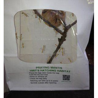 Praying Mantis 2 Egg Cases 100   400 Babies with Hirt's Hatching Habitat : Praying Mantids : Patio, Lawn & Garden