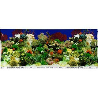 Petco Double Sided Aquarium Background : Aquarium Decor Backgrounds : Pet Supplies