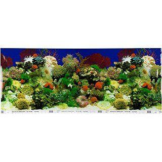 Petco Double Sided Aquarium Background : Aquarium Decor Backgrounds : Pet Supplies