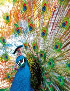 Proud Peacock 500 Piece Jigsaw Puzzle Toys & Games