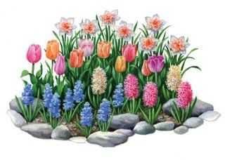 (34 Bulbs) Spring Herald Flower Garden     FALL PLANTING    SPRING FLOWERS    Flowering Bulbs Include: Daffodil Delnashaugh, Pastel Tulip Mix, Hyacinth Pink Frosting, Hyacinth White Pearl, & Hyacinth Delft Blue.    Amazing Seeds for Your Flower Garden