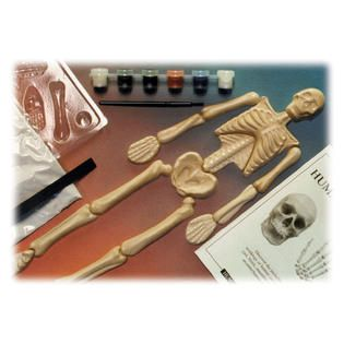 Skullduggery Eyewitness Humanworks Casting Kit   Toys & Games