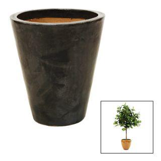 Distinctive Designs T 137 8 G10A LG 8 Fiddle Leaf Tree in Large Anthracite Black Glazed Stoneware Planter
