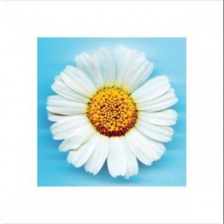 Daisy Flower Poster Print (16 x 16)